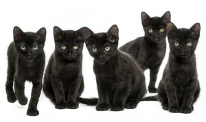 BLACK-CATS-696061